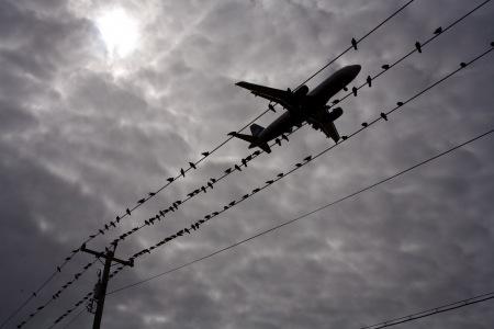airplane-birds