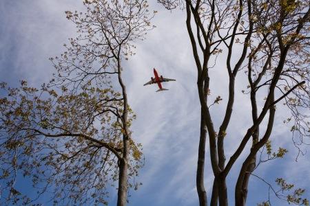 sanjose-tree-airplane-2007